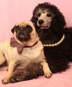 Hunde Magazin zu Partnerbörse und Dating Portal für Hundefreunde ...