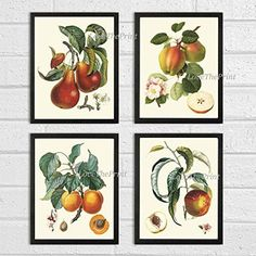 Fruit Print Set of 4 Antique Beautiful Botanical Apple Pear Apricot Peach Plants Garden Nature Home Room Decor Wall Art Unframed LF >>> To view further for this item, visit the image link.