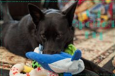 Blog about my spoiled puppy