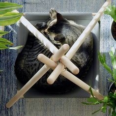 Your cat is probably super duper cute but wait until you see them in the Adventure Tent, a pawsome cat bed / cat hammock / cat tent in a modern design. Cat Teepee, Cat Tent, Cat Hammock, Cat Kennel, Animal Gato, Adventure Cat, Cat Playground, Cat Crafts, Dog Houses