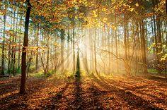 Beautiful morning trees