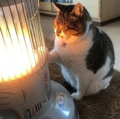 Me in winter when everyone cuddling with bae and I have a heater