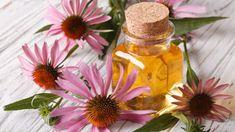 Qual o perfume ideal para o seu negócio? A aromaterapia responde! 7 Chakras, Holistic Nutrition, Proper Nutrition, Herbal Tinctures, Herbalism, Natural Home Remedies, Herbal Remedies, Natural Healing, Curcuma Plant
