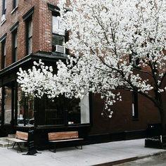 White flowers   Brick house   Black trim