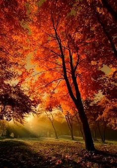 brennender Herbstbaum im Gegenlicht