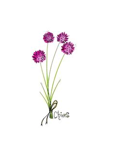 Chives. Ink and Watercolor. By Jessica Dame. #foodart #chives