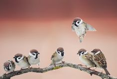 sparrows on a branch from Postallove Cute Birds, Pretty Birds, Beautiful Birds, Animal Pictures, Cute Pictures, Sparrow Bird, Bird Artwork, Colorful Birds, Parakeet