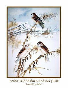 Watercolour 'Weihnachtsspatzen' von Maria Inhoven bei artflakes.com als Poster oder Kunstdruck