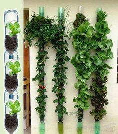 Vertical garden using plastic bottles