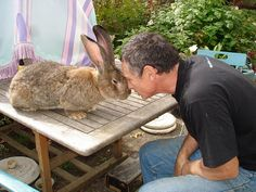 face to face with a big rabbit!