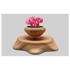 Air Bonsai By THINKER® NO plant (Plum blossom)