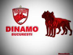 dinamo 48 | FC Dinamo Bucureşti