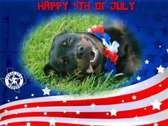 Texas Star Rescue in Longview, Texas would like to wish everyone a happy 4th of July!!! Please remember to keep your pets safe during the fireworks!!!!