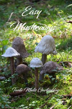 Concrete Mushrooms easy DIY