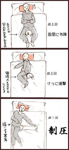 【朗報】冬になり猫が一緒に寝てくれるようになった!→ : ハムスター速報
