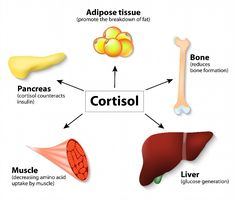 Cortisol is a hormone produced in the body in response to stress. Stress comes in different forms, but never the less, cortisol is produced irrespective of the source of stress. How To Lower Cortisol, Lower Cortisol Levels, Medical Posters, Adrenal Health, Adipose Tissue, Hypothyroidism Diet, Physical Stress, Weight Loss Results, Growth Hormone