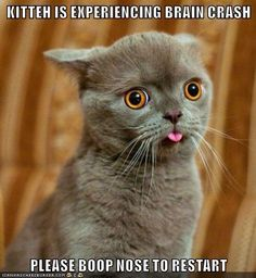 KITTEH IS EXPERIENCING BRAIN CRASH http://cheezburger.com/9005314560