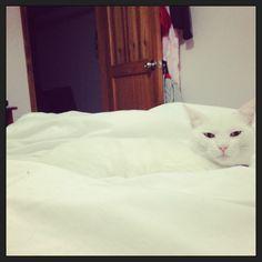 Punto Blanco #gatos