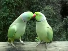 Best Picture For Cutest Baby Animals funny For Your Taste You are looking Funny Birds, Cute Birds, Cute Funny Animals, Cute Baby Animals, Funny Cute, Animals And Pets, Beautiful Birds, Animals Beautiful, Funny Parrots
