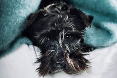 Manta para perros hecha a mano por artesanos de Ezcaray. Calidad premium. 73% mohair (pelo de cabra de angora) y 27% lana natural de textura esponjosa Lana, Dogs, Blankets, Animals, Dog Blanket, Goats, Texture, Hair, Animales