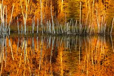 Fall colors impressionism by Victor Liu on 500px