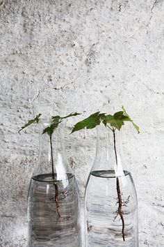 Root Your Plant