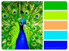 The majestic peacock is the focus of this stunning color palette. Let these bold colors inspire your next masterpiece as you study the way nature combines and balances color to produce stunning displays of color.