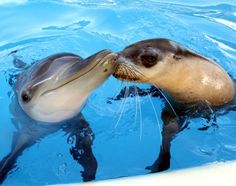 Jet and Miri, both three years old, hang out every day at a marine center in Coffs Harbour, Australia.