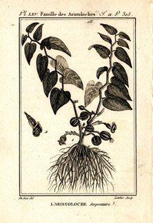 "buffon botanical french 1775 engraving 4 x 6""  $25 - 03"