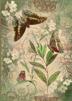 :: Vintage Butterflies ::