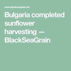 Bulgaria completed sunflower harvesting — BlackSeaGrain