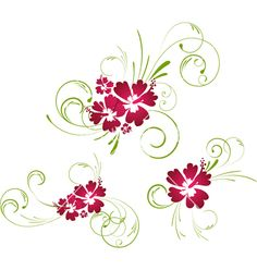 Hibiscus+floral+elements+vector+115357+-+by+AlanaDesign on VectorStock®