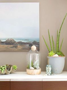 Greenhouse Effect/I like these suculents in a large sea shell planter.  I think I would use it in flower  or rock garden.