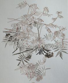 August, the tree in my front garden Rowan, Map, Graphic Design, Tattoo, Drawings, Illustration, Garden, Sketches, Garten
