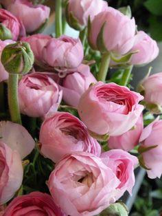 Flo_bloemen_001.jpg