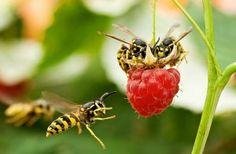 Mua mật ong nguyên chất ở đâu ?  Bạn đừng lo đến với chúng tôi bạn hoàn toàn yên tâm về chất lượng mật ong cũng như giá cả hợp lí . Mật ong của chúng tôi là mật ong tốt nhất , ngon nhất trên thị trường hiện nay  , khách hàng của chúng tôi trải dài từ Nam tới Bắc . Uy tín được khách hàng khẳng định trên mật ong , 100% mật ong nguyên chất không có bất kì tạp chức nào . Hãy liên hệ với chúng tôi đễ được mua mat ong ngon nhất và tốt nhất  Phone : 0908.65.7939 Email: cuahangmatong.com@gmail.com