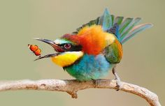 passaros da fauna brasileira fotos - Pesquisa Google