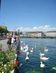 Geneva, Switzerland. Best time to experience is the winter in my opinion. EXPENSIVE!!!!!