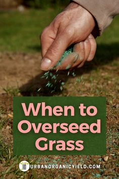 Information on how to plant grass seeds on your lawn. What do you do with the leftover grass seeds? How long you can keep your grass seeds before they go bad? Read on to find out. #LawnCare #GrassSeeds #Landscaping #Gardening #UrbanOrganicYield