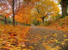 Country road, November 2007. (joiseyshowaa/Flickr)