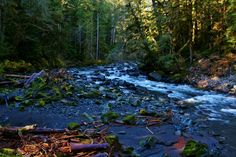 Along the Staircase Rapids Loop Trail, Olympic National Park