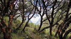 Start of the trek to Laguna Huaraz, Peru Backpacking Peru, Lake Titicaca, Machu Picchu, Trek, Coast, Country Roads