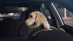 267 best favorite commercials images in 2019 dog test subaru rh pinterest com