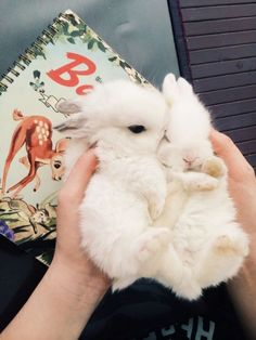 A handful of twin fluffy baby bunnies! What could be better?