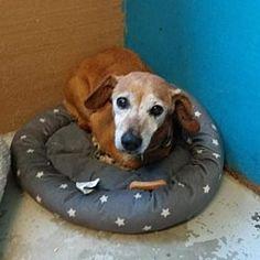 Dachshund Adoption, Pet Adoption, Columbus Georgia, Finding Your Soulmate, Bean Bag Chair, Safari, Diva, Dog Cat, Meet