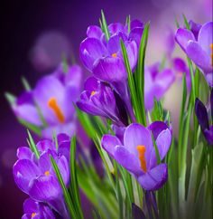 .Beautiful Flowers for Every occasion...for C.S.P., Minnie L and LayRou. Have a Very Blessed Day