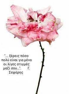 Rose Grand Siècle by Rachel Lévy, 2015 Real Flowers, Beautiful Flowers, Dry Flowers, Peony Illustration, Billy Kidd, Macro Flower, Bachelor Of Fine Arts, No Rain