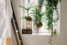 Our hanging planters in the bathroom of the FvF Apartment.
