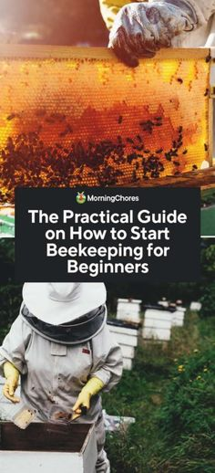 Living a prepper way of life is not just helpful for getting ready for the future, however it's a fantastic way to live a less stressful life. Many individuals get tired of the rat race and long for something more relaxing. How To Start Beekeeping, Beekeeping For Beginners, Top Bar Hive, Types Of Insects, Bee Boxes, Backyard Beekeeping, Water Solutions, Survival Tips, Urban Survival