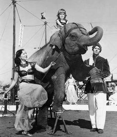 The Brewer Family with Jerry the Elephant in the Gainesville Community Circus. The photo is undated but the circus ran from 1930-1955